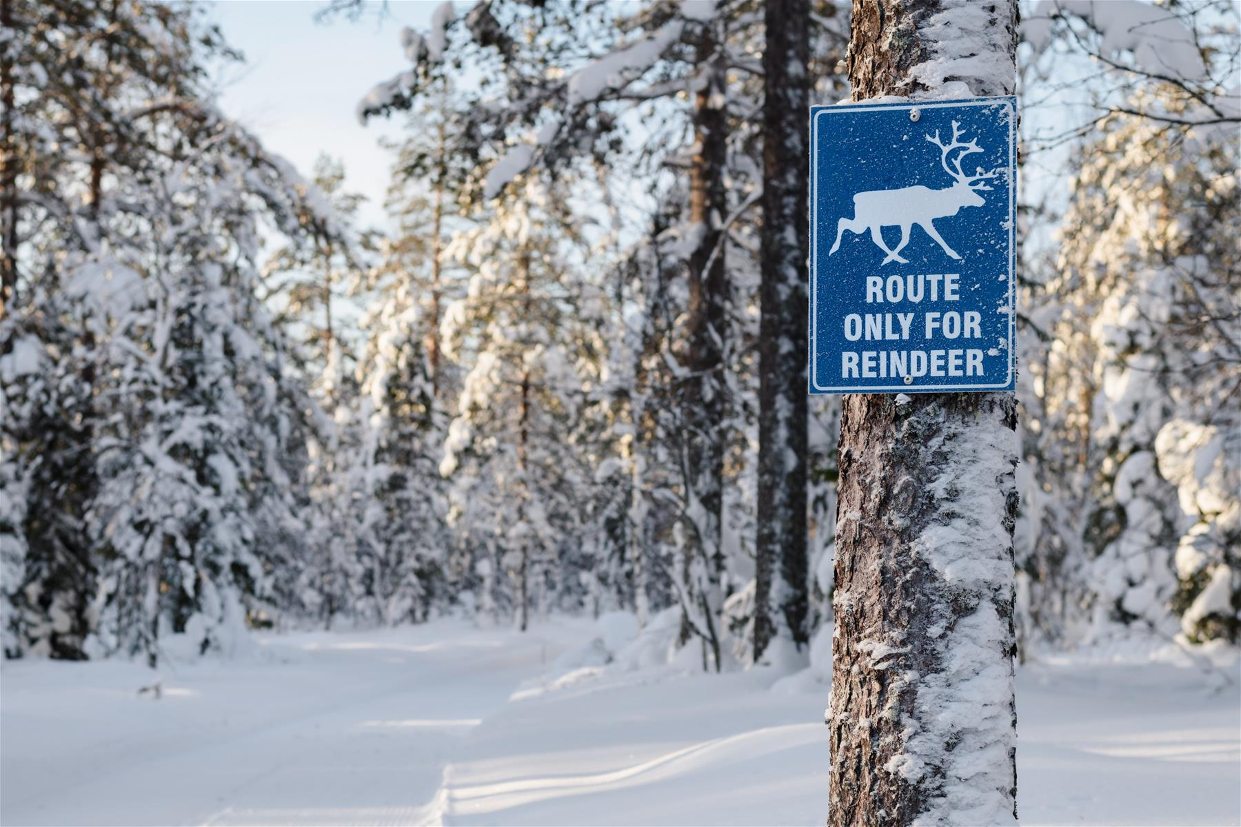 Sign route only for reindeer in Santa Claus Village in Rovaniemi Lapland Finland.jpg